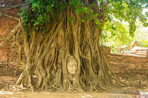 Jbuddha-head-in-tree-roots-thailand-best-travel-blogger-asai-best-travel-photographer-asia-